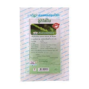 Phyllanthus amarus - чай для печени